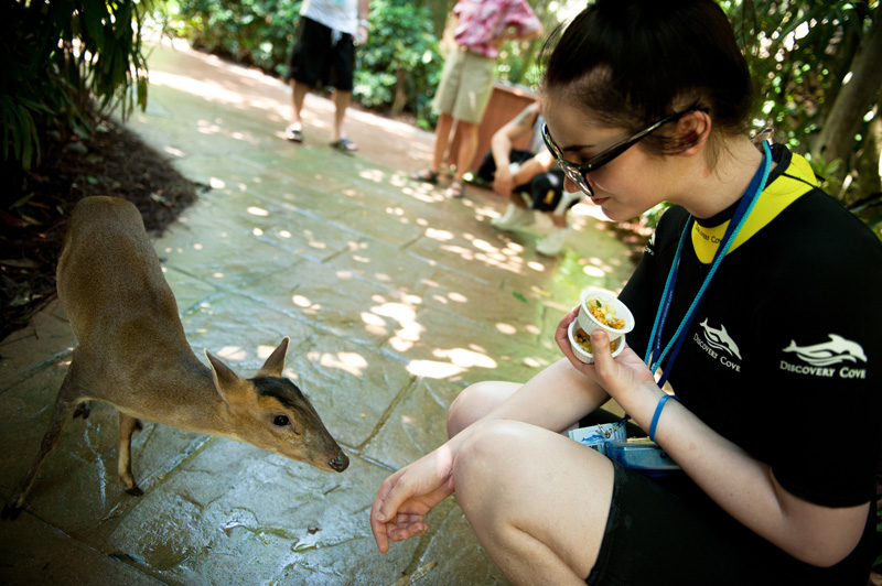 Discovery Cove, Sea World, Florida, Orlando, Dolphins, Swim, Park, Beach, Lazy, River, Relaxed, Scenery, Landscape, Miniature, Deer, Aviary, Feeding, Hand feeding, Cute, Animals, Baby