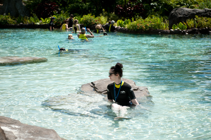 Discovery Cove, Sea World, Florida, Orlando, Dolphins, Swim, Park, Beach, Lazy, River, Relaxed, Scenery, Landscape, Water, Ocean,