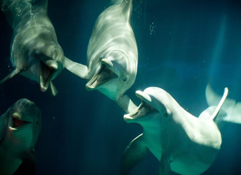 Epcot, Disney, Disneyland, Walt Disney, Florida, Disney World, Aquarium, Coral, The Living Seas, The Seas, Nemo & Friends, Fish, Dolphins, Happy, Smiling