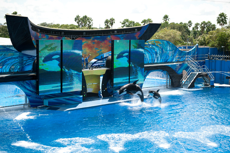 Sea World, Orlando, Florida, Theme Park, Aquarium, Tank, Dolphin, Killer Whale, Shamu, Show, One Ocean, Splash, Jumping, Leaping, Water,