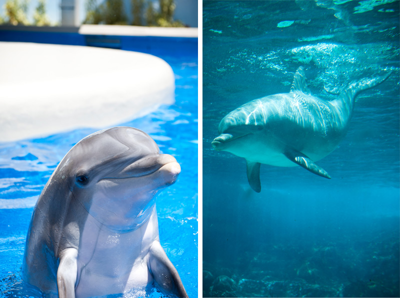 Sea World, Orlando, Florida, Theme Park, Aquarium, Tank, Dolphin, Baby, Cheeky, Smiling, Happy, Underwater, Hello,