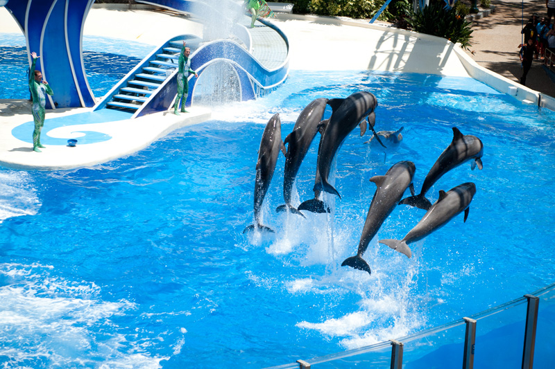 Sea World, Orlando, Florida, Theme Park, Aquarium, Tank, Dolphin, Jumping, Pod, Blue Horizons, Show, Tricks