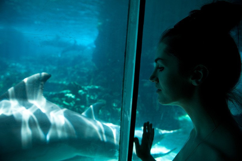 Sea World, Orlando, Florida, Theme Park, Aquarium, Tank, Dolphin, Dolphins, Swimming, Glass, Looking in,