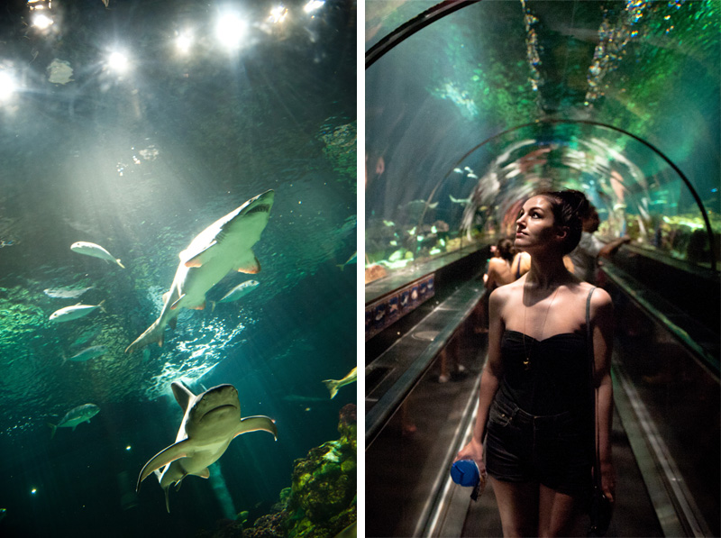 Sea World, Orlando, Florida, Theme Park, Aquarium, Tank, Sharks, Fish, Underwater, Tunnel, Tube,