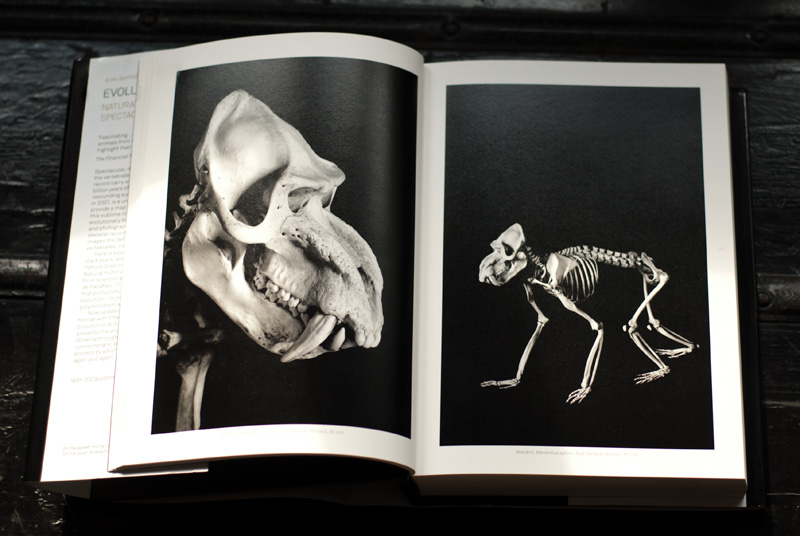 FAIIINT new in, current favourite things Evolution in action by Jean-Baptiste de Panafieu & Patrick Gries