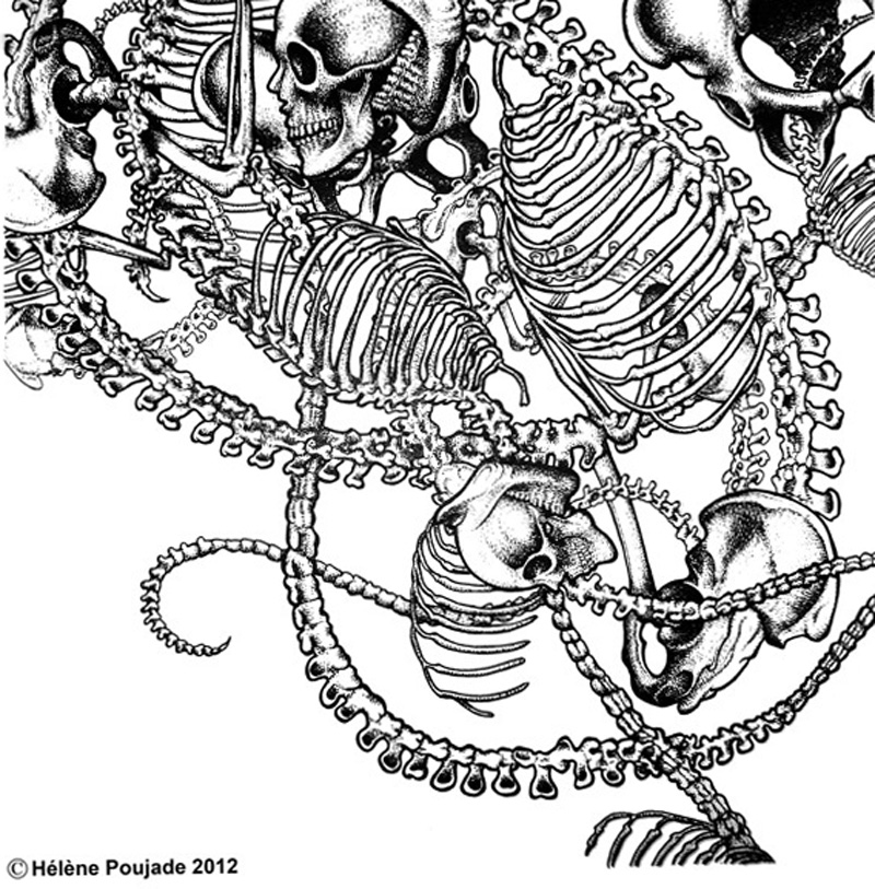 Hélène Poujade osteology spine skull - pen & ink illustration, graphic, tattoo, artist, black & white.