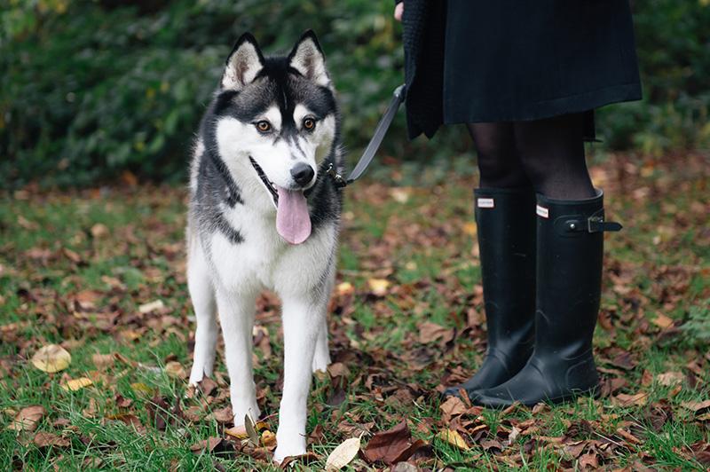 FAIIINT wearing Hunter wellies wellingtons with Nico siberian husky. Autumn in the park forest leaves on floor, beautiful nature.
