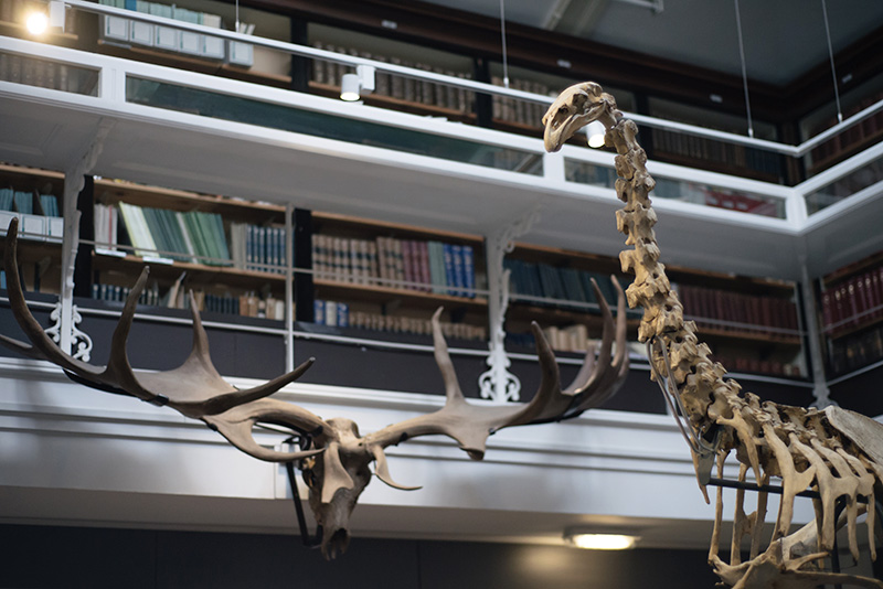 FAIIINT York weekend break. Yorkshire Museum Moa skeleton & Giant Deer skull and antlers.