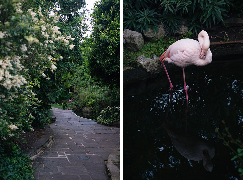 The Roof Gardens Kensington London. Flamingos.