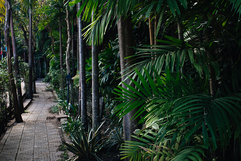 Sokhalay Angkor Villa Resort in Siem Reap Cambodia, path through the trees.