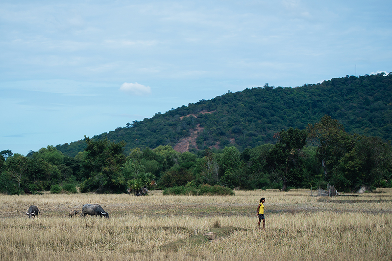 Countryside landscape in Siem Reap Cambodia, local girl and buffalo in field.