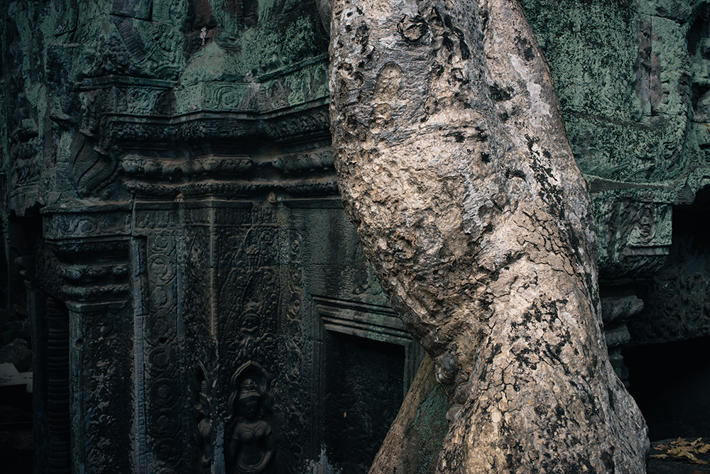 Ta Prohm temple Siem Reap Angkor Cambodia. Ruins with large tree roots.