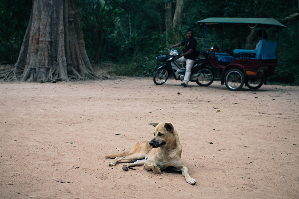 Ta Prohm temple Siem Reap Angkor Cambodia. Stray dog waiting by Tuk Tuk.