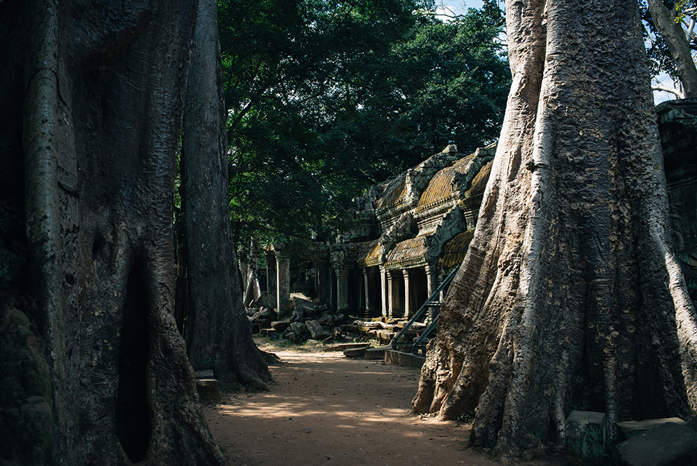 Ta Prohm temple path Siem Reap Angkor Cambodia. Crumbling ruins reclaimed by nature and overgrown with trees and plants.