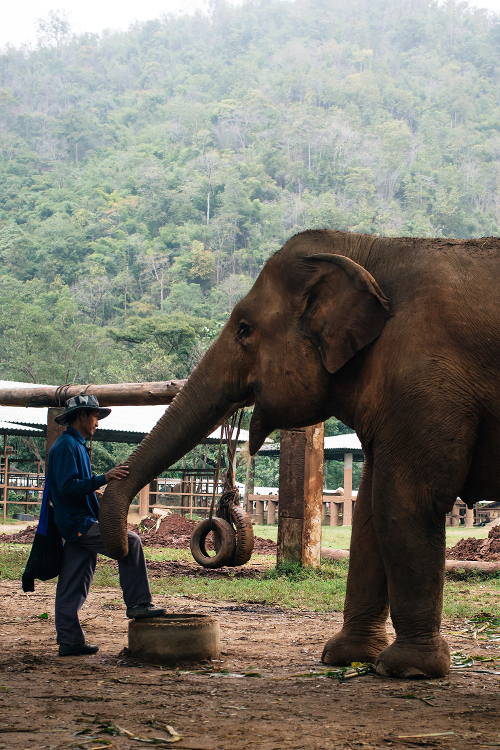 Keeper at Elephant Nature Park rescue and sanctuary Chiang Mai Thailand.