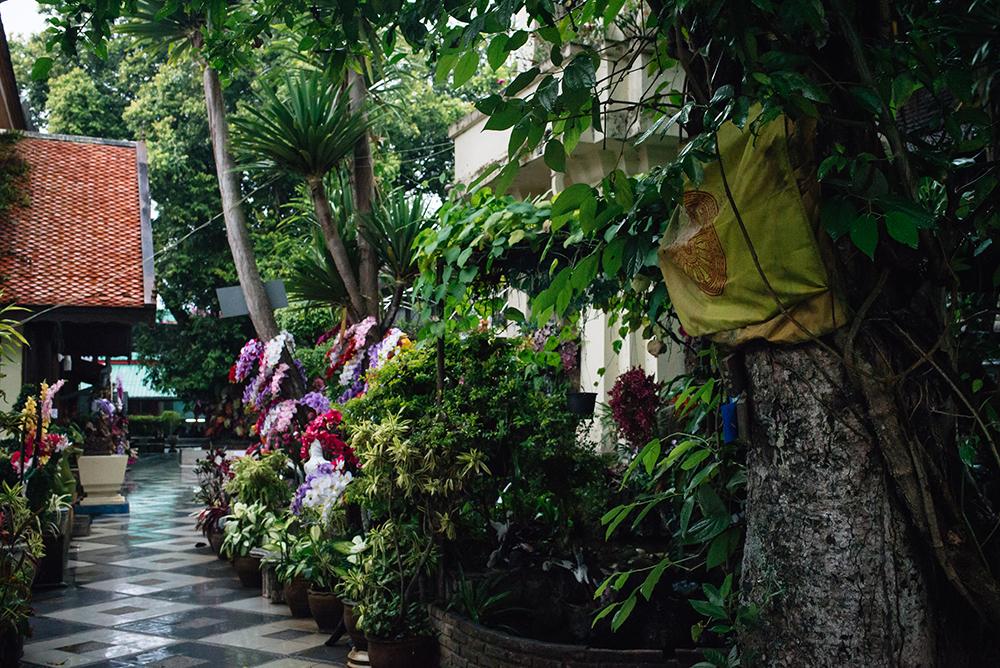 Wat Phra That Doi Suthep Chiang Mai Thailand garden.