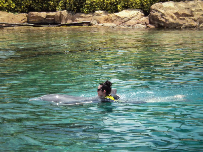 Discovery Cove, Sea World, Florida, Orlando, Dolphins, Swim, Park, Beach, Lazy, River, Relaxed, Scenery, Landscape, Swimming, Experience, Dolphin Swim, Ocean