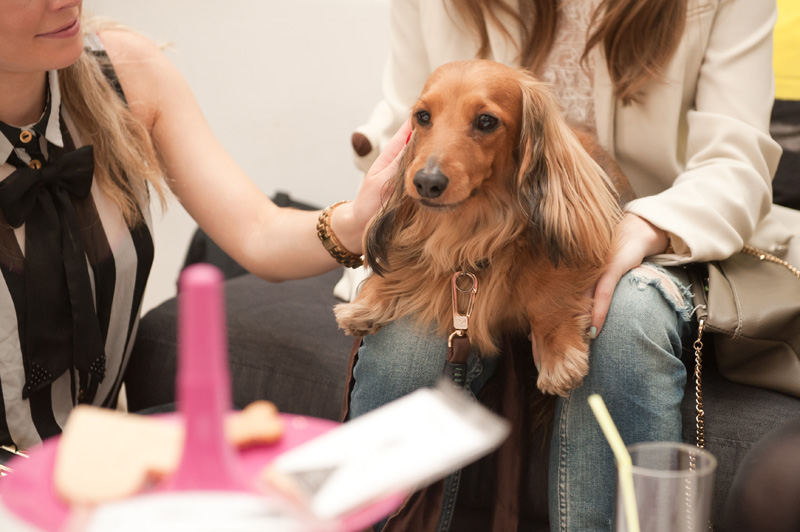 PetsPyjamas Fashion Blogger Puppy Dog Party co hosted by Rosie Fortescue & Noodle, Dachshund, Sausage Dog