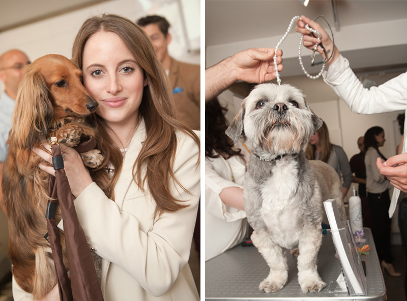 PetsPyjamas Fashion Blogger Puppy Dog Party co hosted by Rosie Fortescue & Noodle, Dachshund, Sausage Dog, Grooming, shih tzu