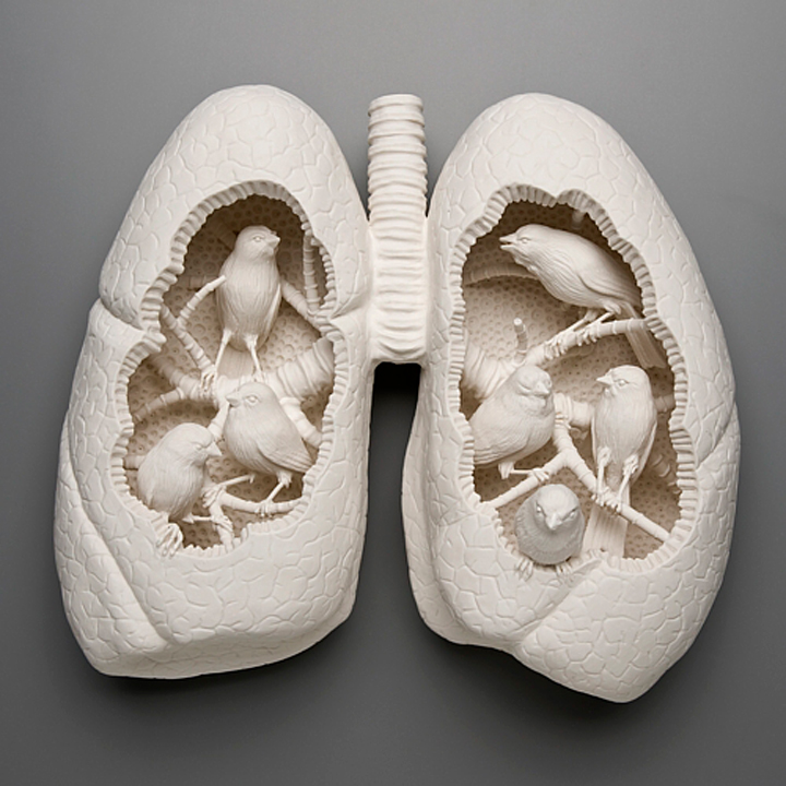 Kate MacDowell, Canary, Lungs, porcelain, Glaze, White, Delicate, Fragile, Beautiful, Handcrafted, Art, Sculpture, Macabre, Nature, Anatomy, dissected, dissection, Human, Birds, Hand Built, Haunting, China,