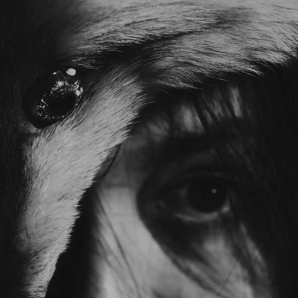 Fur, Girl, Fashion, Photography, Black & White, B&W, Fairytale, Nature, Fox, Fur, Dead, Skin, Eyes