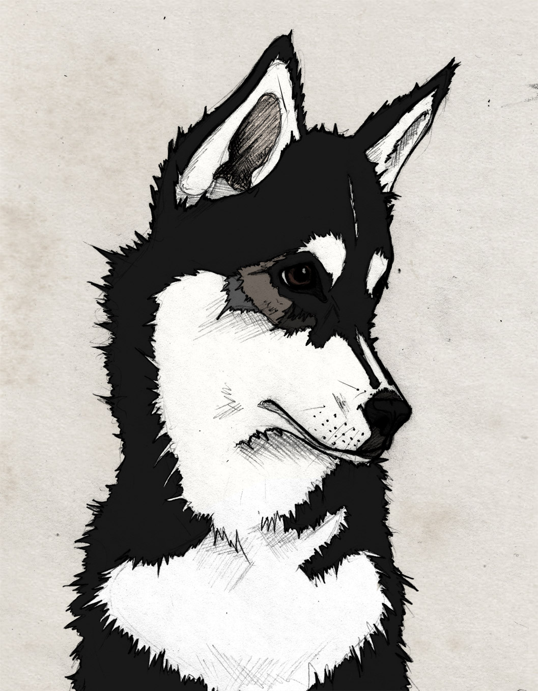 Nico, Sketch, Illustration, Husky, Siberian Husky, Puppy, Black, Graphic, Photoshop