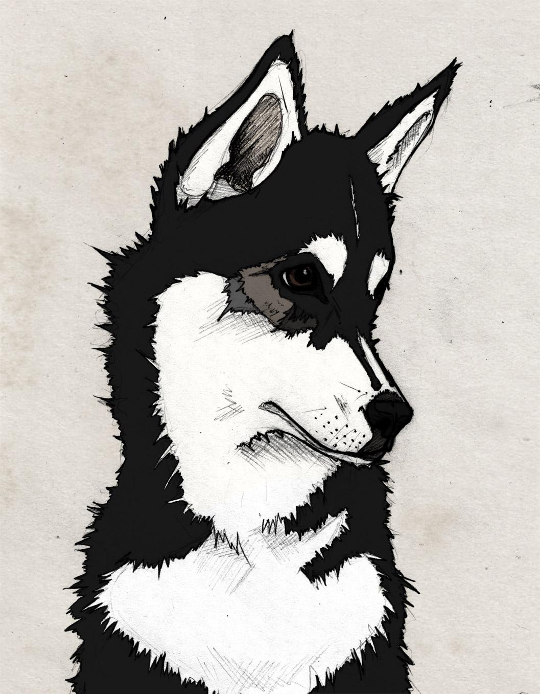 Nico, Sketch, Illustration, Husky, Siberian Husky, Puppy, Black, Graphic, Photoshop