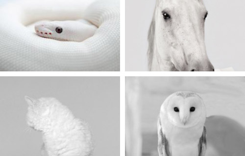 White, Animals, Snake, Horse, Cat, Owl, Albino